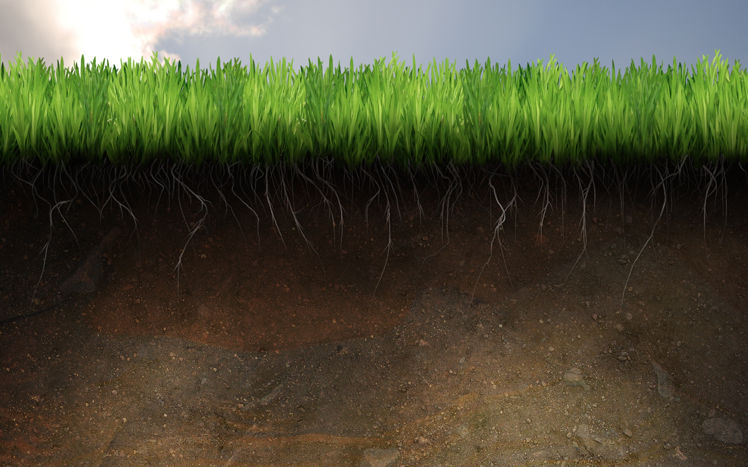 soil_and_grass_2560_blogdowallpaper